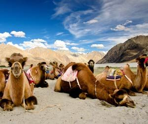 leh to manali taxi service