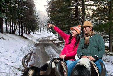 Manali Shimla Honeymoon Package